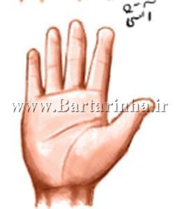 %اسرار و رازهای کف بینی خطوط برجسته بر روی کف دست و انگشتان نشانه چیست؟_alt%
