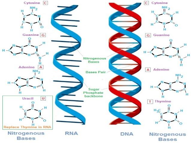 آیا در  DNA انسان موجودات فرا زمینی نقش دارند؟  توانایی های فرا زمینی در اصلاح DNA