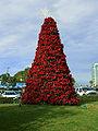 Poinsettia tree.jpg
