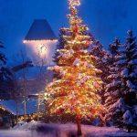 تصاویری از درخت روز کریسمس,درخت روز عید کریسمس نماد چیست؟,درخت کریسمس ۲۰۱۷