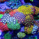 تعبیر خواب دیدن مرجان، معنی مرجان در خواب