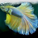 تعبیر خواب دیدن ماهی،معنی ماهی در خواب