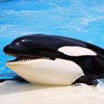 تعبیر خواب دیدن نهنگ، معنی نهنگ در خواب
