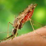 تعبیر نیش خوردن از حشرات، معنی نیش خوردن از حشرات