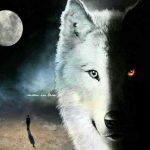 تعبیر خواب دیدن گرگ – حیوان، معنی گرگ – حیوان در خواب