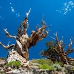 مرگ درختی کهنسال