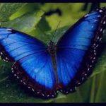 تعبیر خواب دیدن پروانه، معنی پروانه در خواب