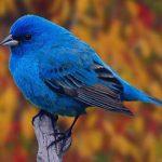 تعبیر خواب دیدن پرنده، معنی پرنده در خواب