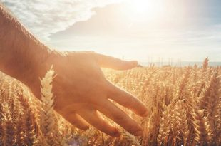 رضایت از روزی موجب برکت در روزی و حکایت زیبای برکت در روزی