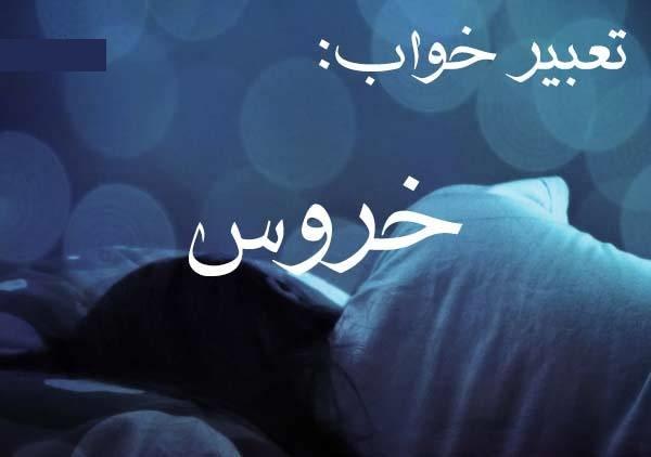 کاملترین تعبیر خواب خروس (دیدن خروس در خواب چه معنی و تعبیری در بیداری دارد ؟)