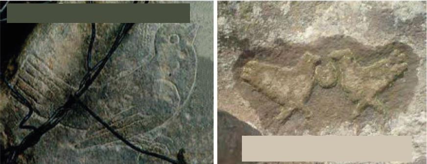 کارشناسی علامت کبوتر در گنج یابی - رمزگشایی نشانه کبوتر در باستان شناسی
