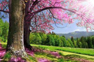 دستورالعمل قرآنی مجرب برای گشایش بخت و ازدواج دختران و خانم های سن بالا