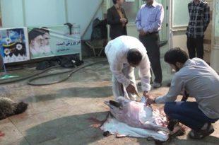 طریقه ذبح و قربانی کردن گوسفند به نیت شفای مریض